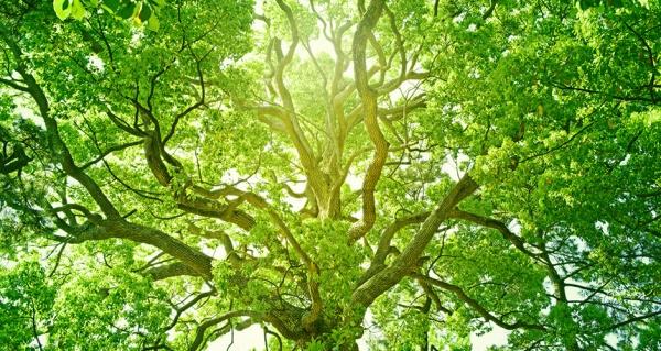 Umwelt und Energie - Bericht an die Gesellschaft 2015 |  Naspa 2015