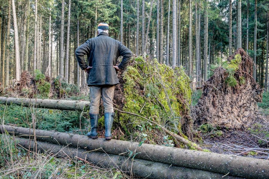 Umwelt- und Klimaschutz: Verzögerungen bei Beseitigung von Sturm- und Dürreschäden